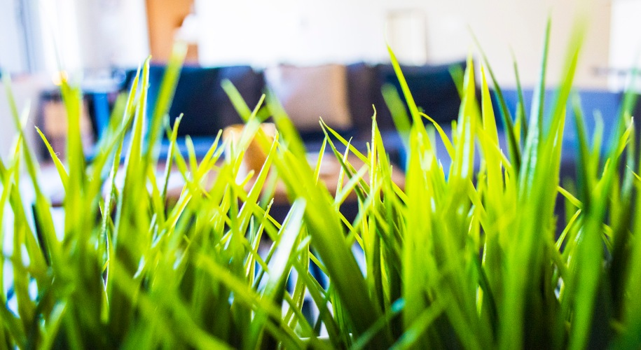 Ikea Plants_Ikea Couch_Ikea_Striped_Rug_Living_Room_Decor_Ideas_Taylor_Seely_Dash_of_Daisy_Blog