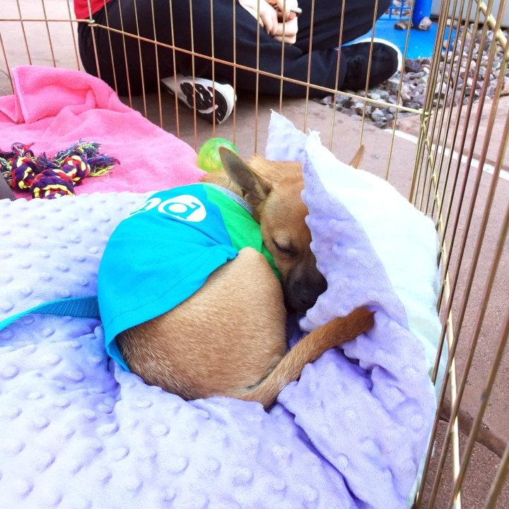 ollie-at-the-adoption-event